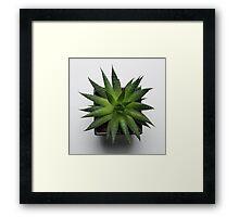 Spike Framed Print