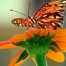The Butterfly and Mexican Sunflower by DottieDees