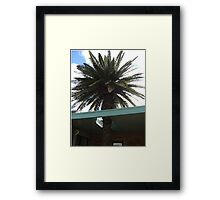 Roof Palm Framed Print