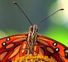 Butterfly Face by DottieDees