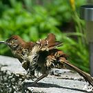 Little Birds Shakes of TRopical Storm Ana by TJ Baccari Photography