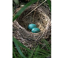 Robin Eggs Photographic Print