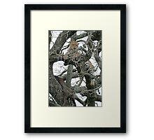 Leopard Kill Framed Print