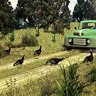 Turkey Crossing by Walter Colvin