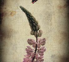 Summer Zen by Heather  Waller-Rivet  IPA