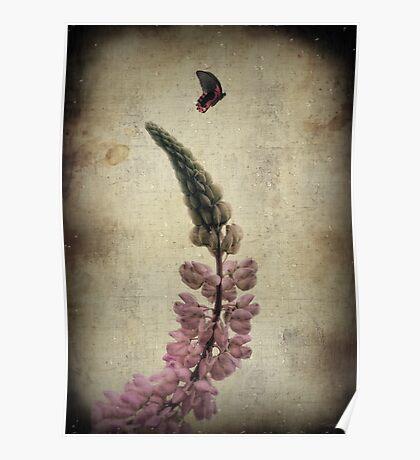 Summer Zen Poster