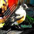 Matthew 6:26 Robin by Ruth Palmer