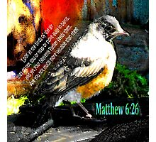 Matthew 6:26 Robin Photographic Print