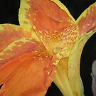 orange flower by Sheila McCrea