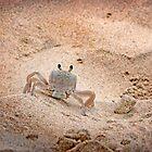 Hello Mr. Crab by ShotsOfLove