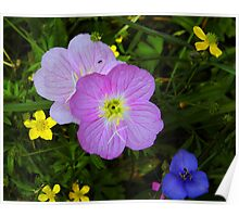 Wildflower Collection With An Ant Poster
