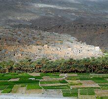 Pise Village, Oman  by Julie Waller