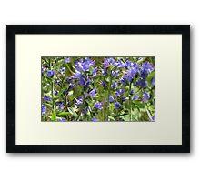 Peaceful Purple Framed Print