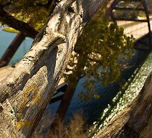 The Love Tree over 360 bridge by Roschetzky