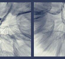 Dandelion Study by wwyz