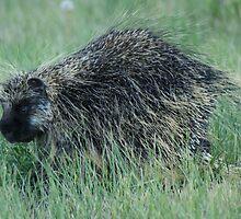 Prickly by wwyz