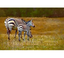 Zebra Mom and Foal Photographic Print