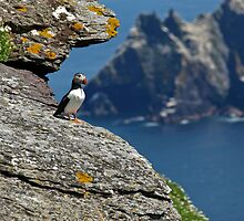 Puffin Skellig Island, Ireland by upthebanner