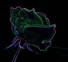 neon rose by dieselpete