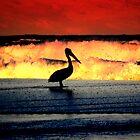 pelican by miroslava