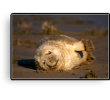 Just a little stretch! Canvas Print