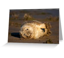 Just a little stretch! Greeting Card