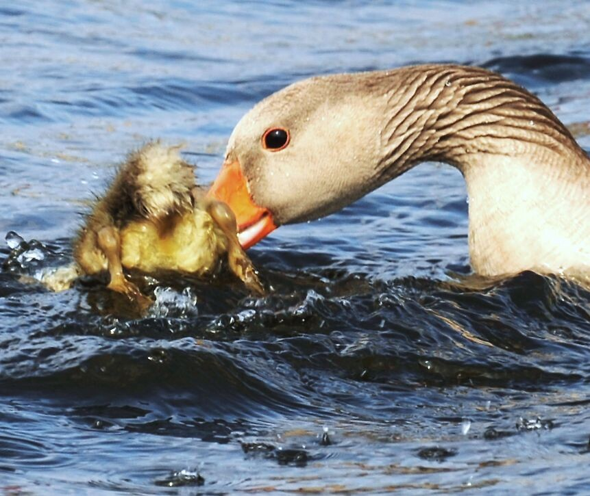 Do as I told you...( it's a tough job being a parent) by Alan Mattison