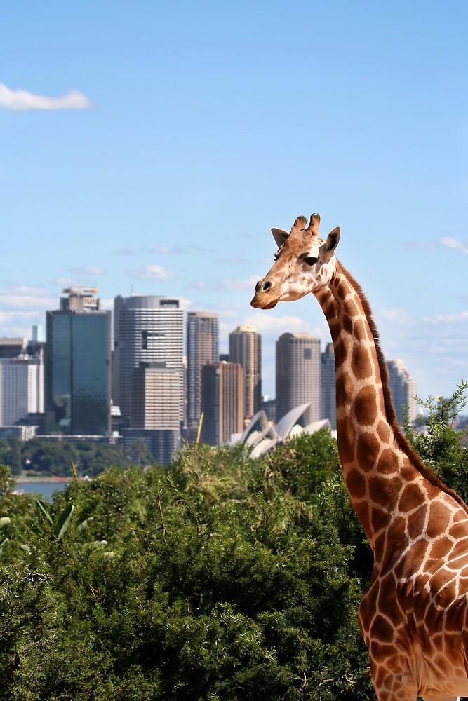 !!! Hey !!! Isn't that Sydney? by Ken Boxsell