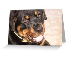 Rottweiler Portrait  Greeting Card