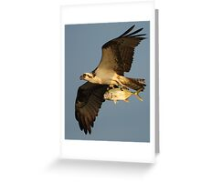 Osprey Fishing Greeting Card