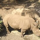 White Rhinos by Edward Denyer