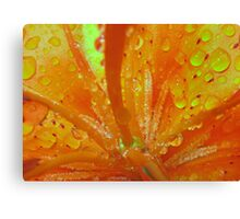 Lilly in the Rain ( Living Motion )  Canvas Print