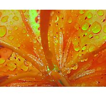 Lilly in the Rain ( Living Motion )  Photographic Print