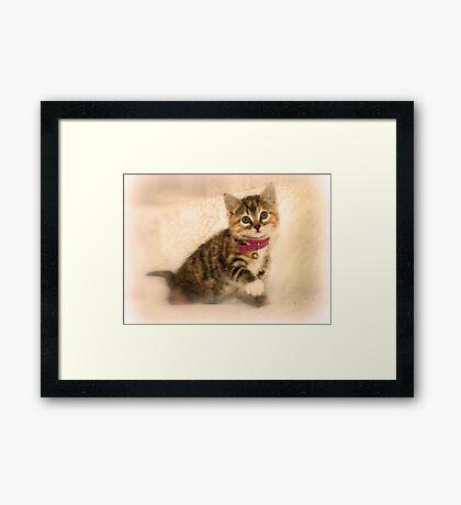 The Little Cat Framed Print