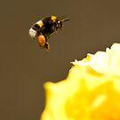 Honey, Honey by dsargent