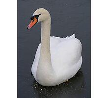 Swan on ice Photographic Print