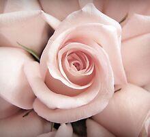 Pink by Caroline Fournier