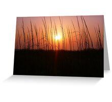 Sunset Through Dune Grass Greeting Card