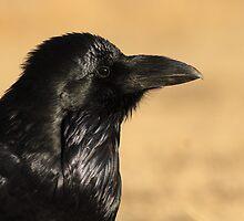 Sunset Raven by William C. Gladish