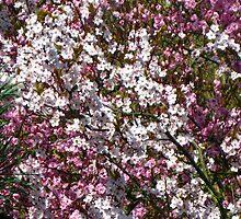 Plum Blossoms by Marta Boulden