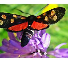 Cool black butterfly with red polka dots Photographic Print