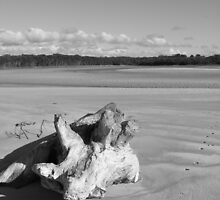 Drift wood by Esther's Art and Photography