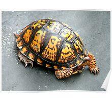 Roadside turtoise Poster