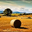 golden fields of hay, irish landscape by Noel Moore Up The Banner Photography