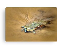 Blue Crab Hiding in the Sand Canvas Print
