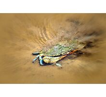 Blue Crab Hiding in the Sand Photographic Print
