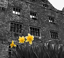 Lemaneagh Castle, Daffodil B&W County Clare, Ireland by upthebanner