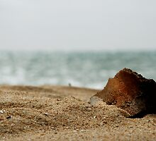 driftwood by Anthony Mancuso