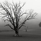Come See My Ghostly Tree by rjpmcmahon