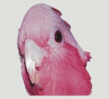 Australian Galah (short sleeve T-shirt) by mandyemblow